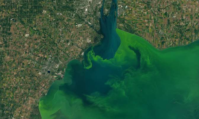 Ohio city votes to give Lake Erie personhood status over algae blooms